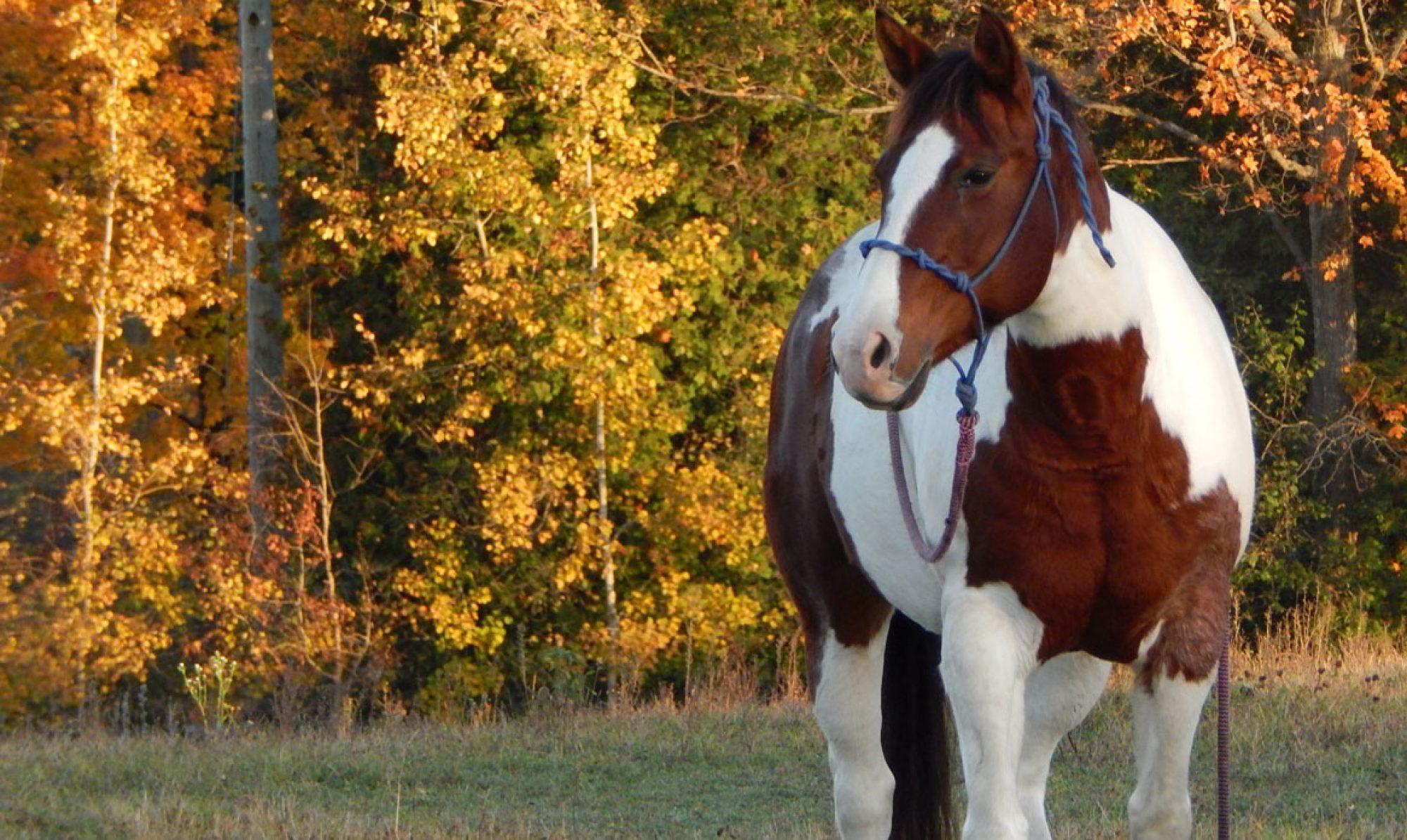 Saffron Equine Centre